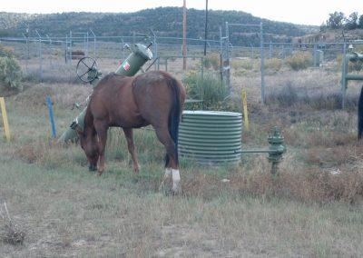4_wildlifephotocontesthorses2