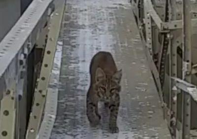 CAT-ON-CATWALK